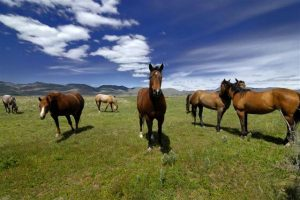 3582242_Horses-in-Pasture-(Small)