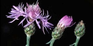"""Fall Stewards - """"Noxious and Obnoxious Weeds"""" @ Education and Outreach Center"""