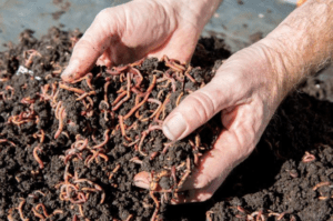 Vermicomposting 101 Workshop @ Education and Outreach Center